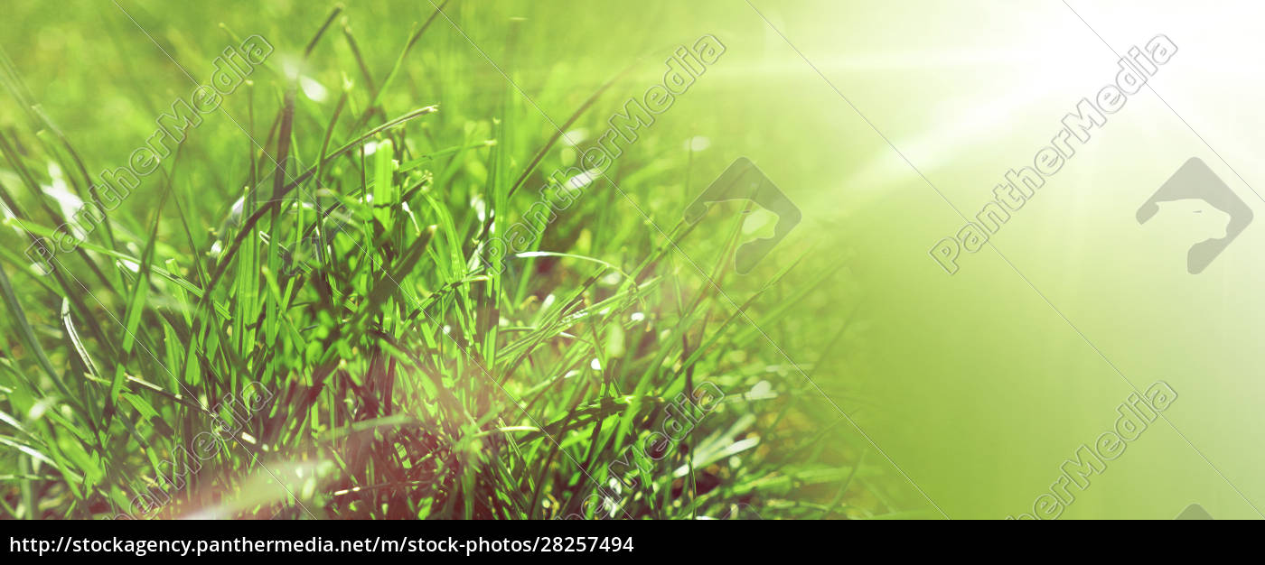 grass, or, meadow, background, , natural, header - 28257494