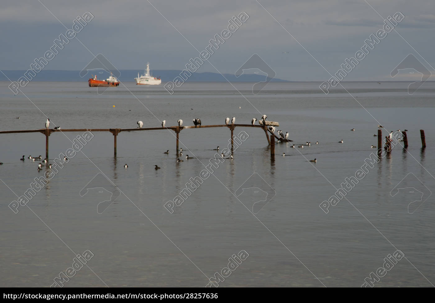 jetty, with, imperial, shags, and, ships - 28257636