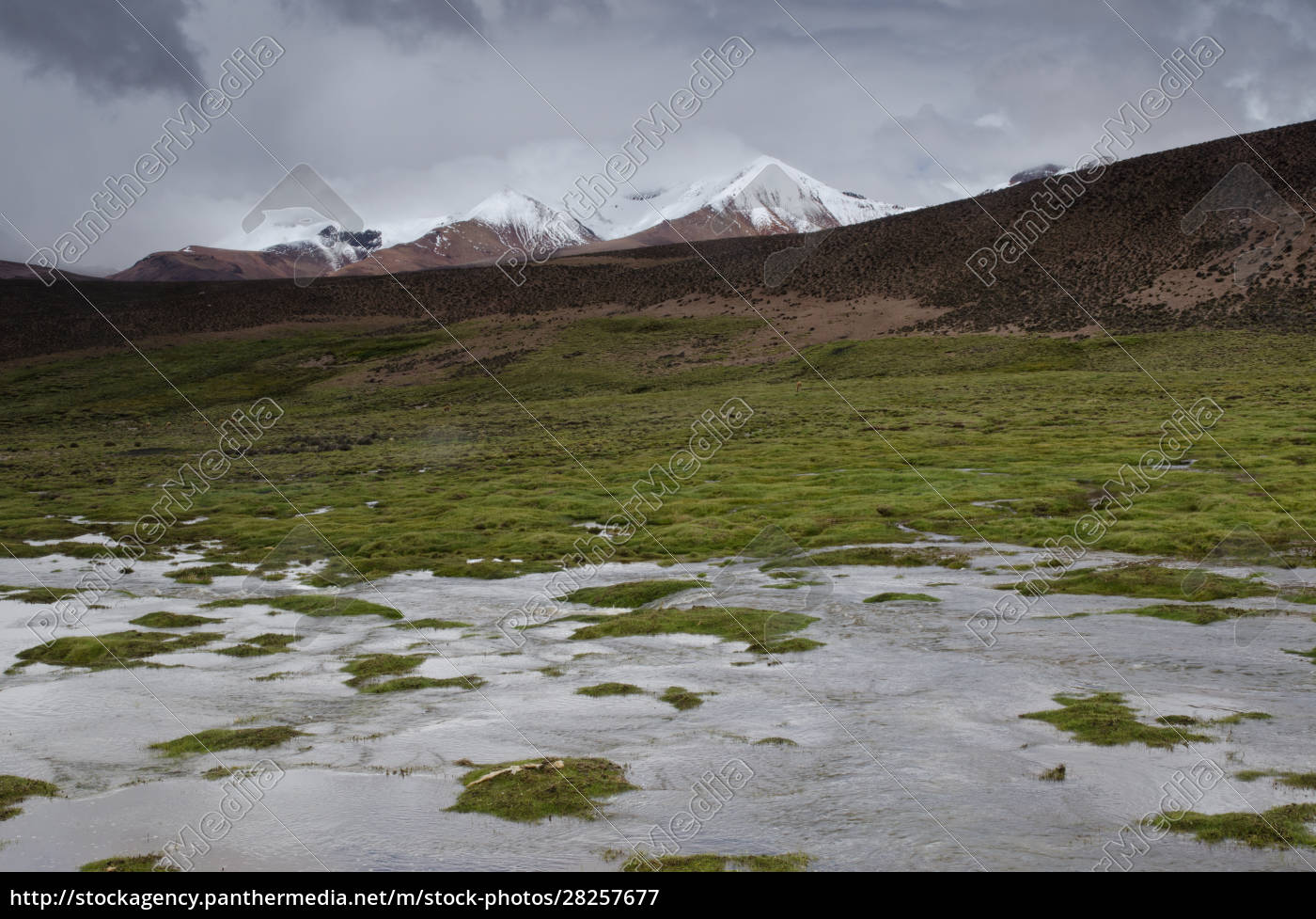 lauca, river, , meadow, and, snowy, peaks - 28257677