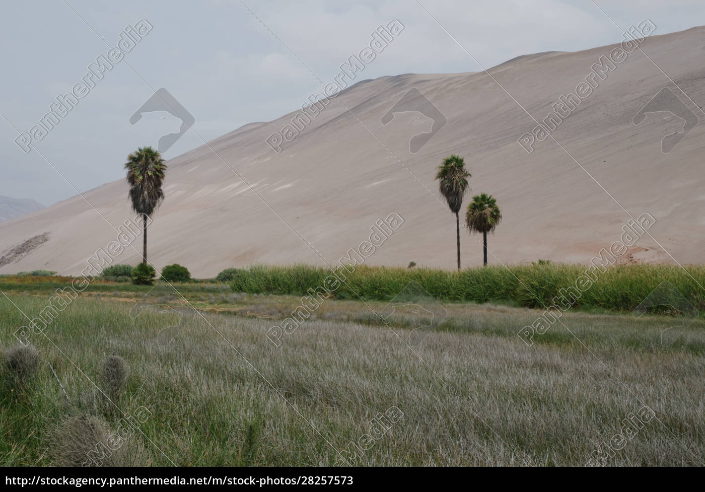 lluta, valley, in, the, arica, y - 28257573