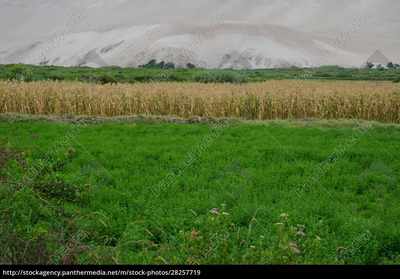 lluta, valley, in, the, arica, y - 28257719