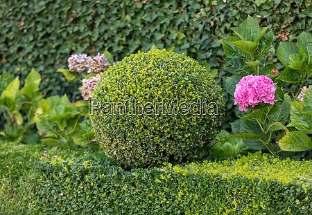 manicured, garden, shrubs., green, garden, balls - 28257737