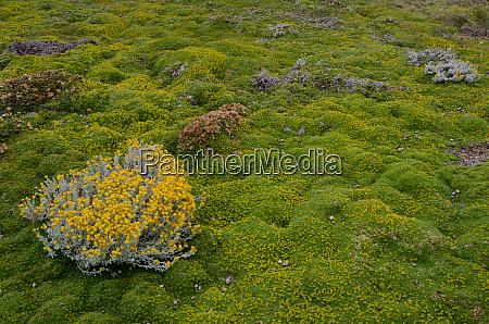 plant, of, senecio, sp., in, flowering - 28257468