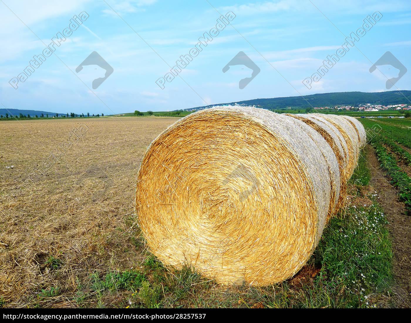 straw, bales - 28257537