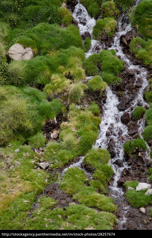 stream, in, a, green, meadow, in - 28257674