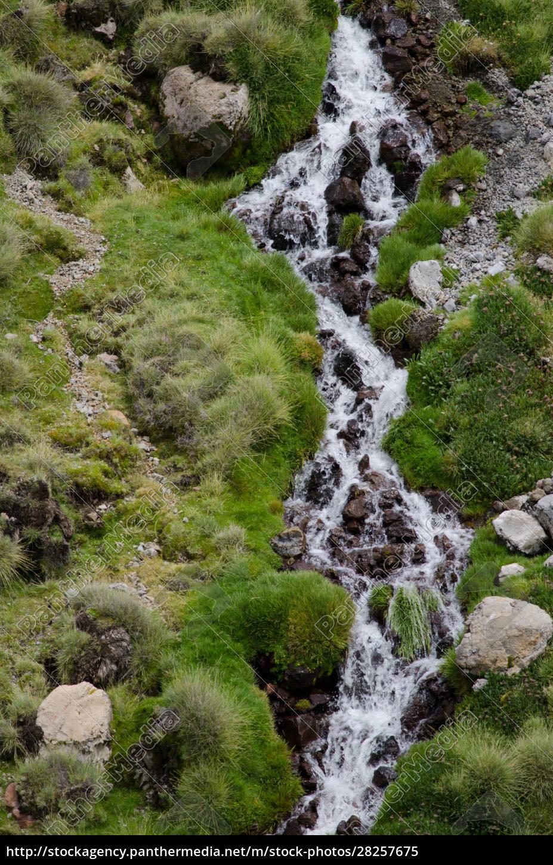stream, in, a, green, meadow, in - 28257675