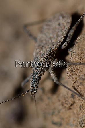 true bug in las cuevas of