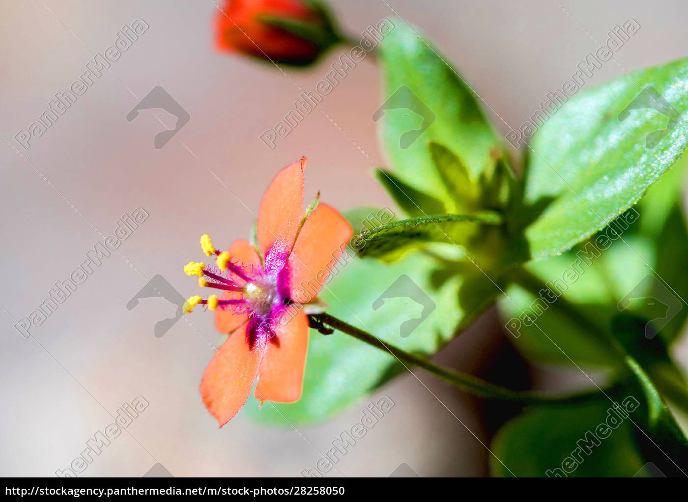 beautiful, tiny, orange, flower, in, a - 28258050