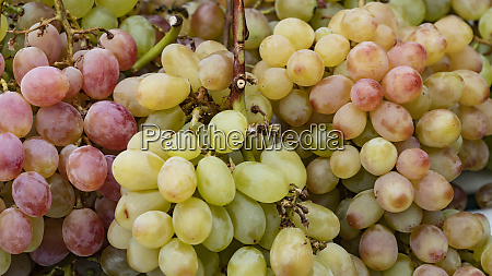 grapes, in, detail - 28258586