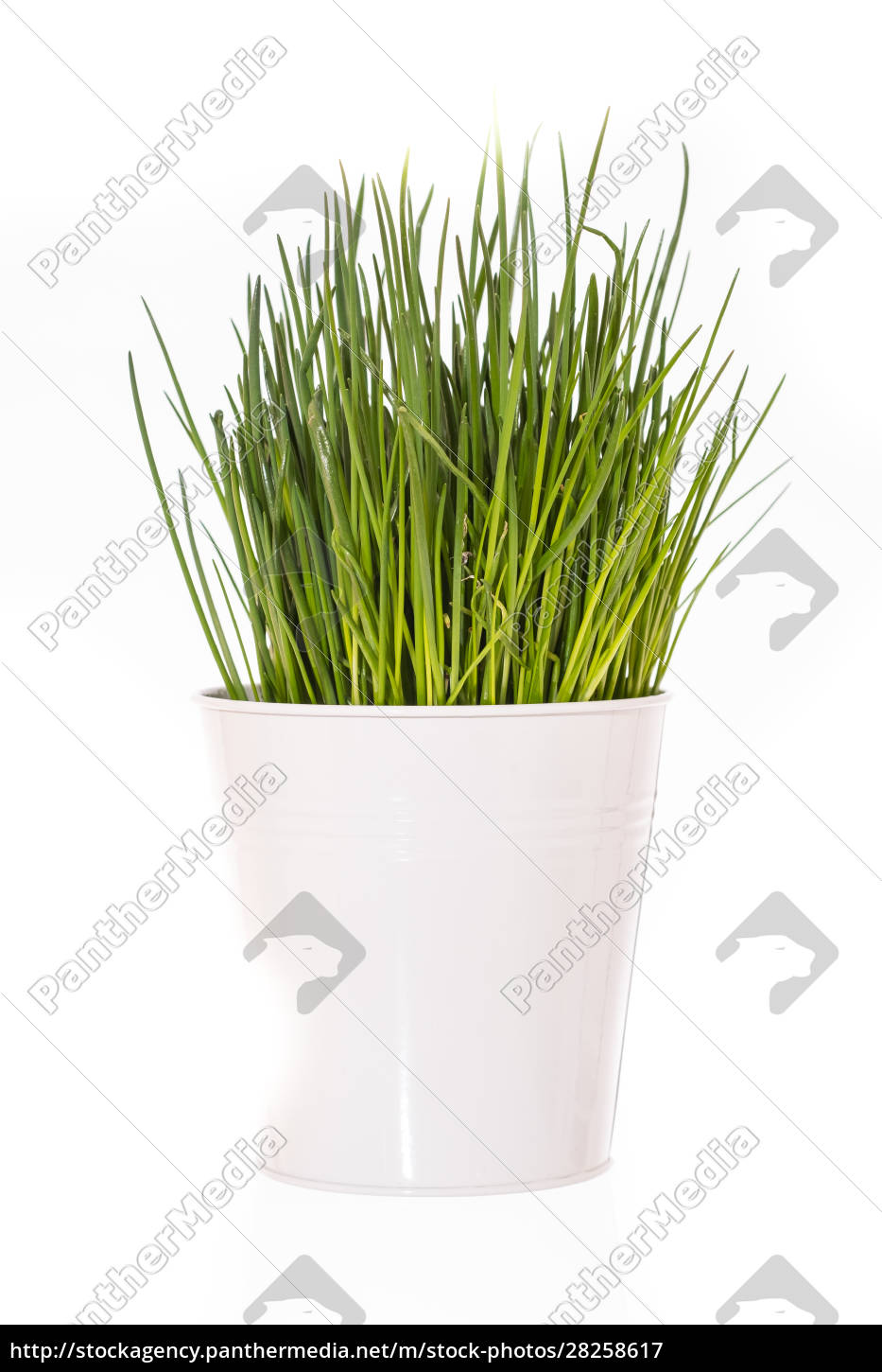 green, herb, chives, (allium), in, white - 28258617
