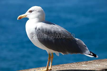 gull, on, the, background, of, the - 28258395