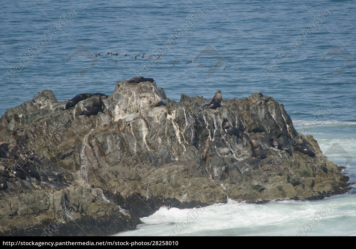 rocky, cliff, with, south, american, sea - 28258010