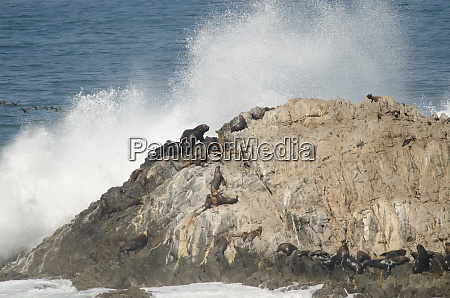 rocky, cliff, with, south, american, sea - 28258145
