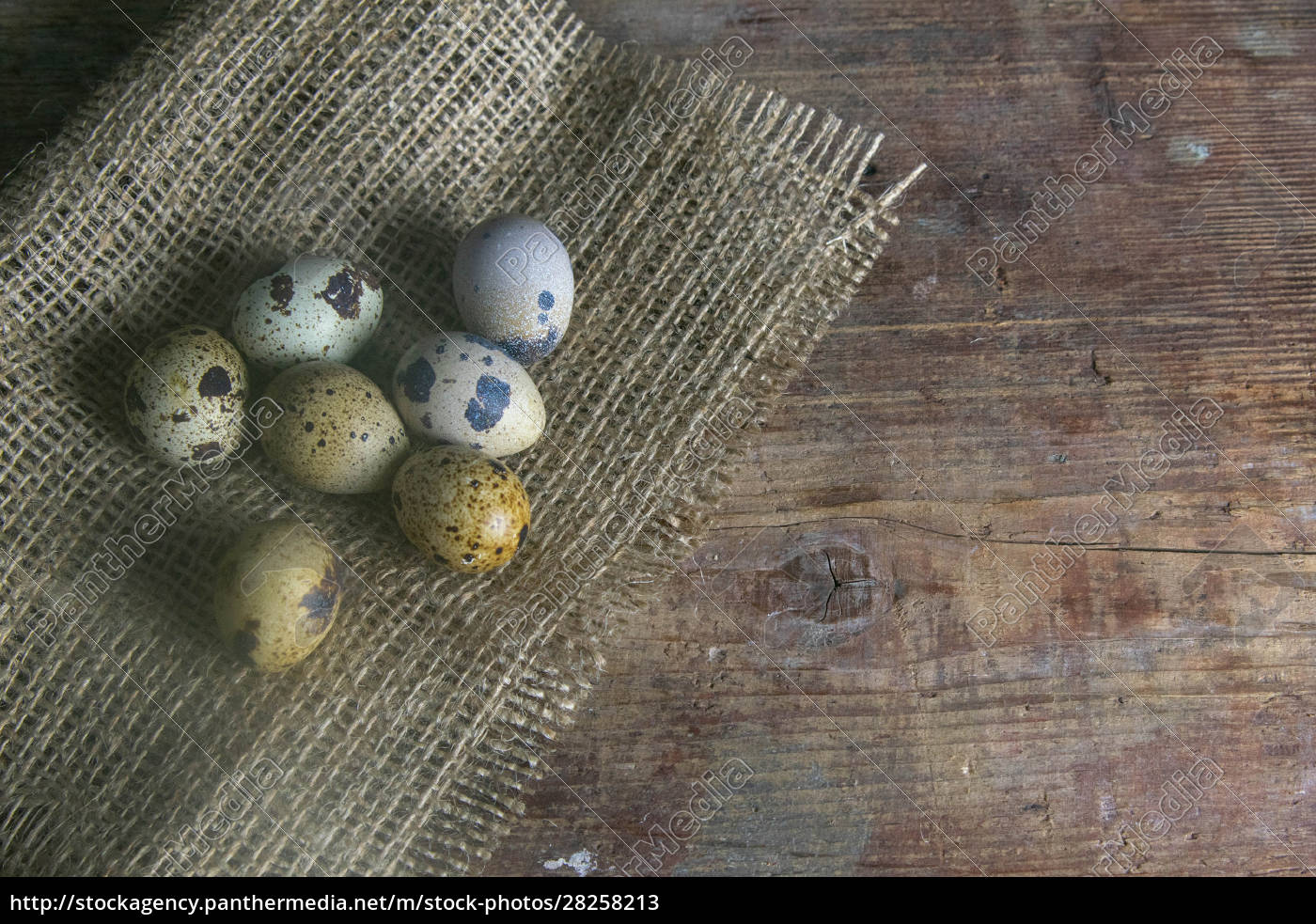 the, quail, eggs, stand, on, the - 28258213