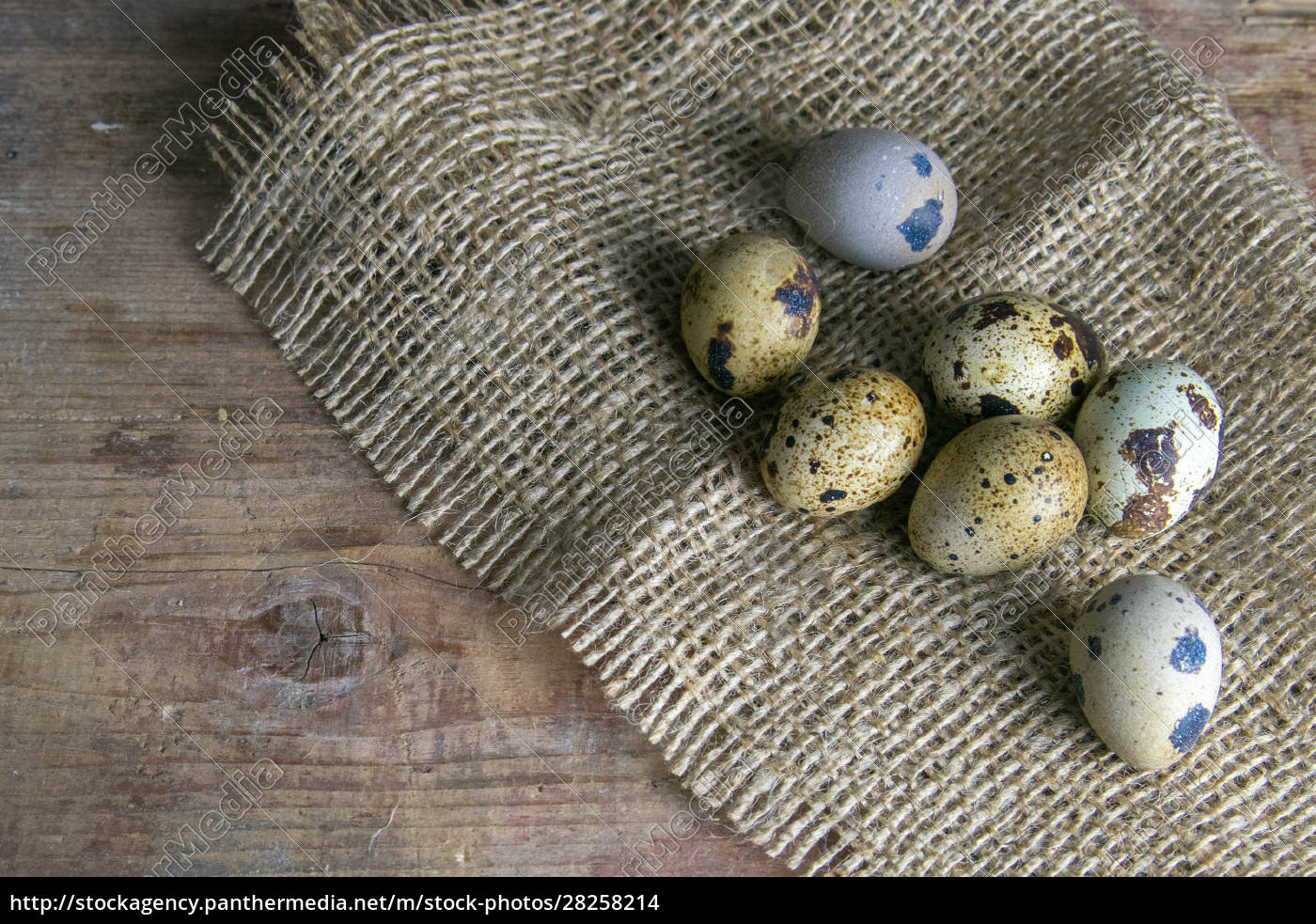 the, quail, eggs, stand, on, the - 28258214