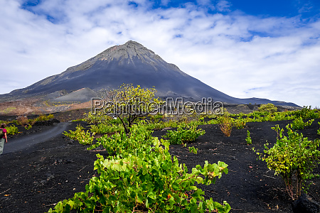 pico do fogo and vines in