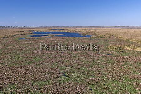 endless, wetland, prairie - 28259363
