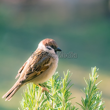 sparrow, on, a, branch - 28259245