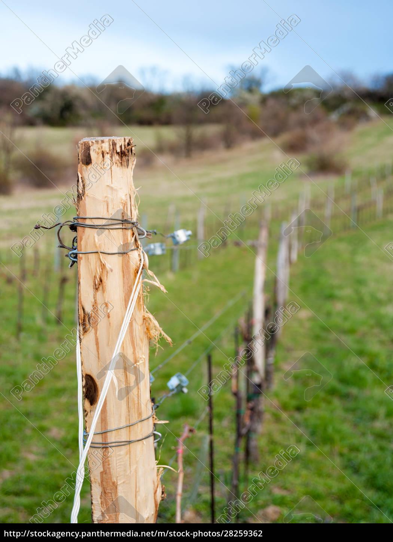 wire, at, a, vineyard, in, burgenland - 28259362
