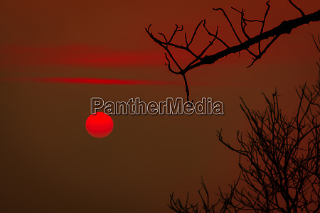 beautiful silhouette leafless tree and red