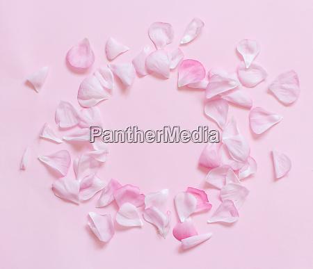 pink petals frame on a light