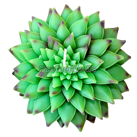 green lotus isolated