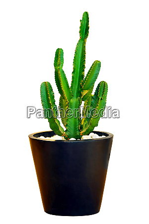 big, cactus - 28277548