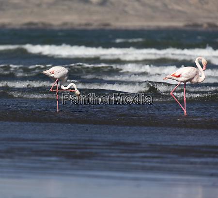 flamingo, birds, in, front, of, the - 28277979