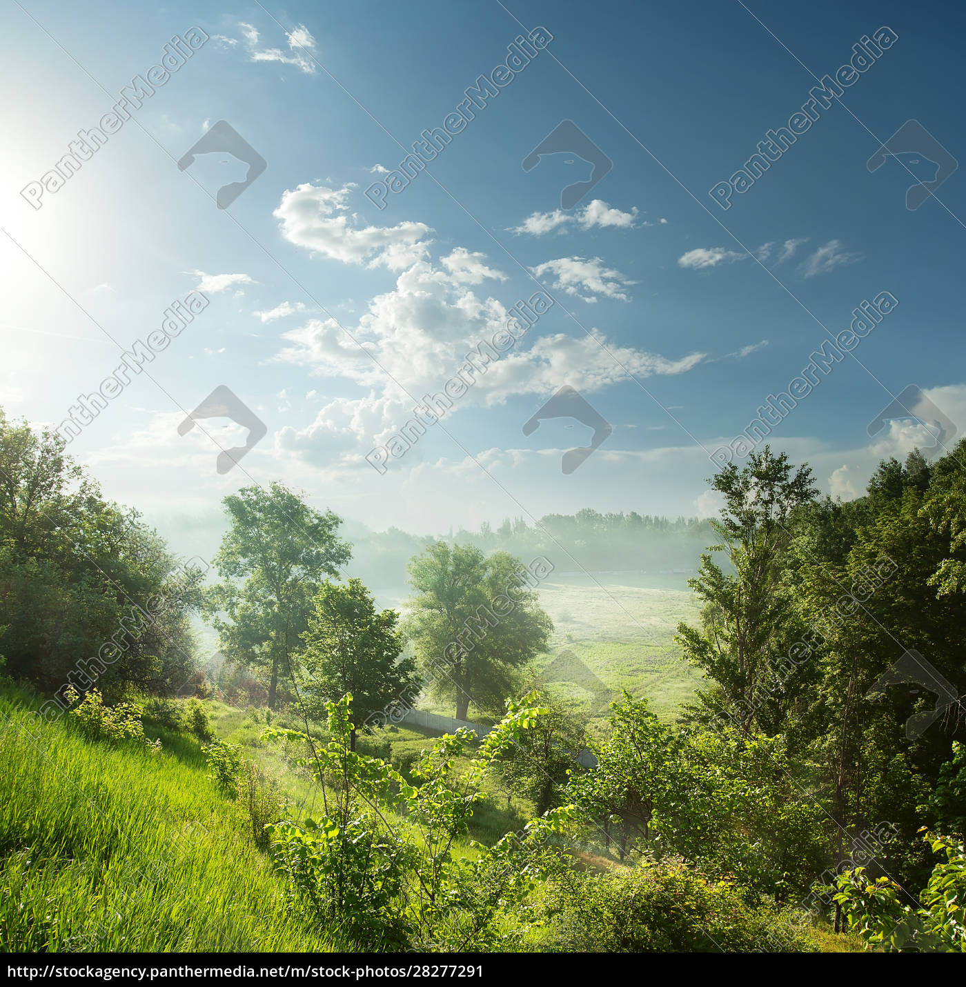 foggy, morning, in, a, green, forest - 28277291