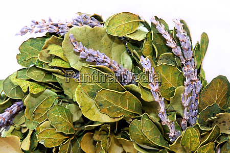 lavender, wreath - 28277671