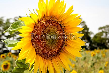 a, close-up, of, a, beautiful, yellow - 28278579