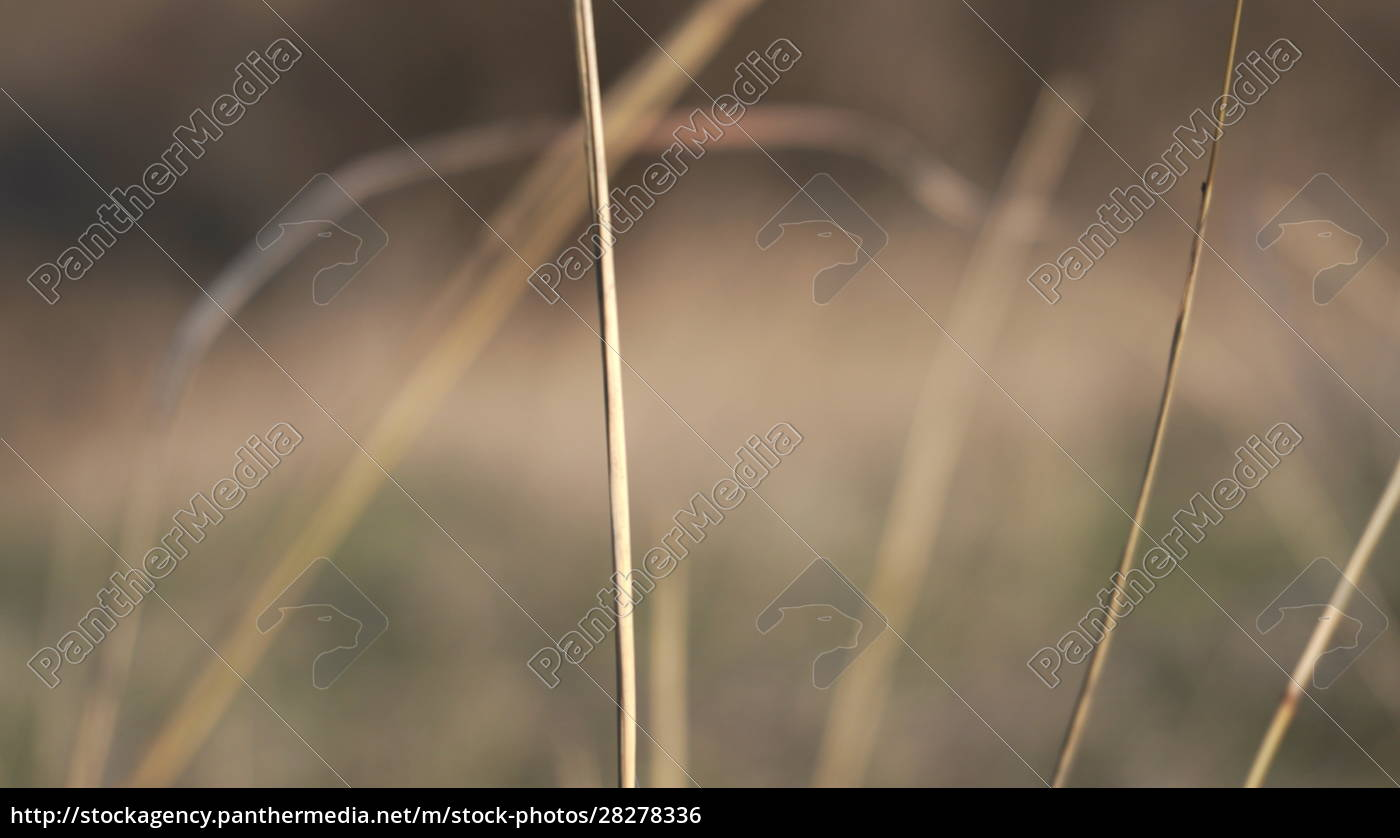 abstract, background, of, a, field, plant - 28278336