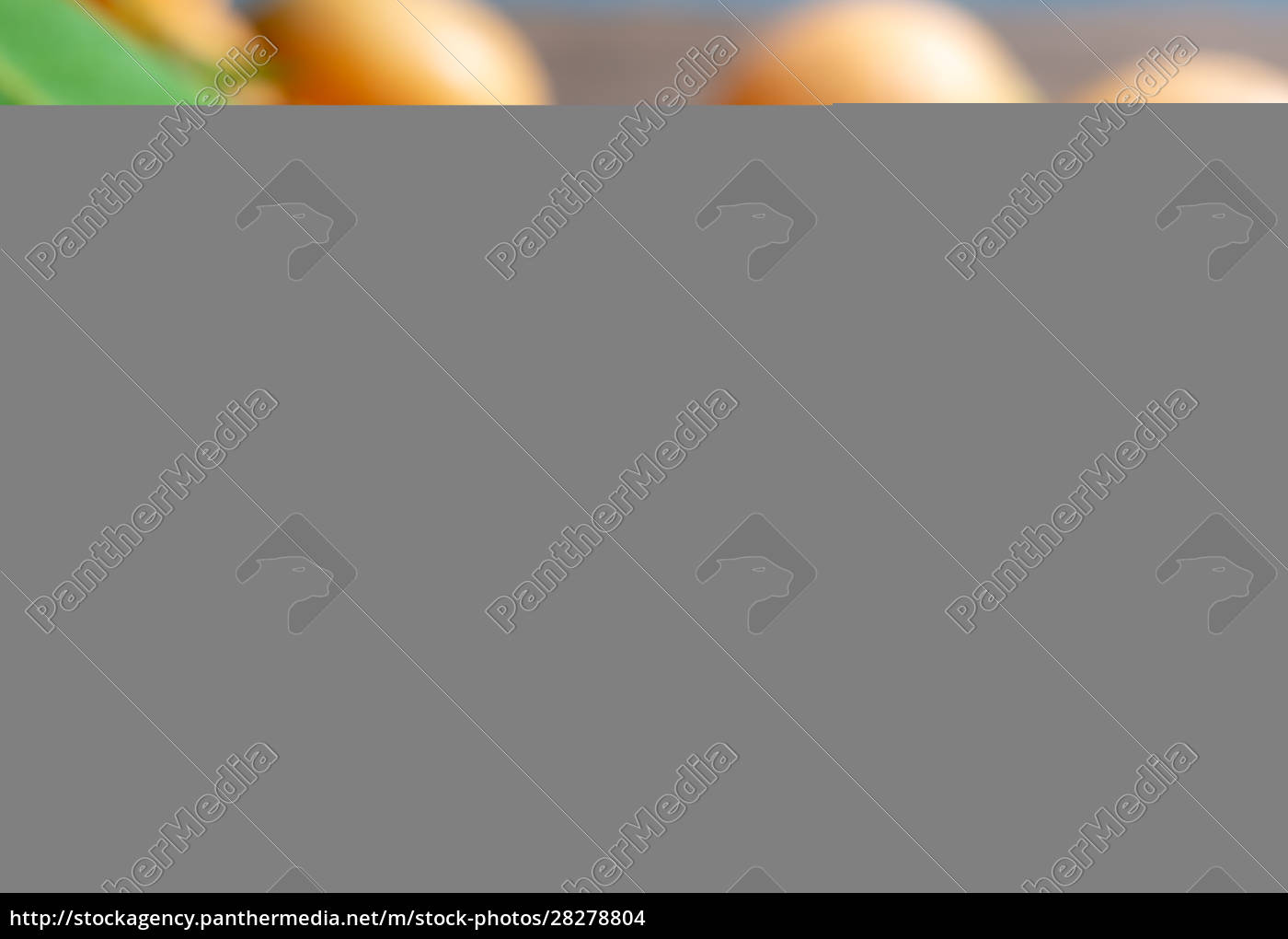 close, up, mayongchid, maprang, marian, plum - 28278804