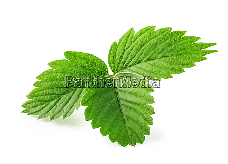 leaves, of, strawberry - 28278652