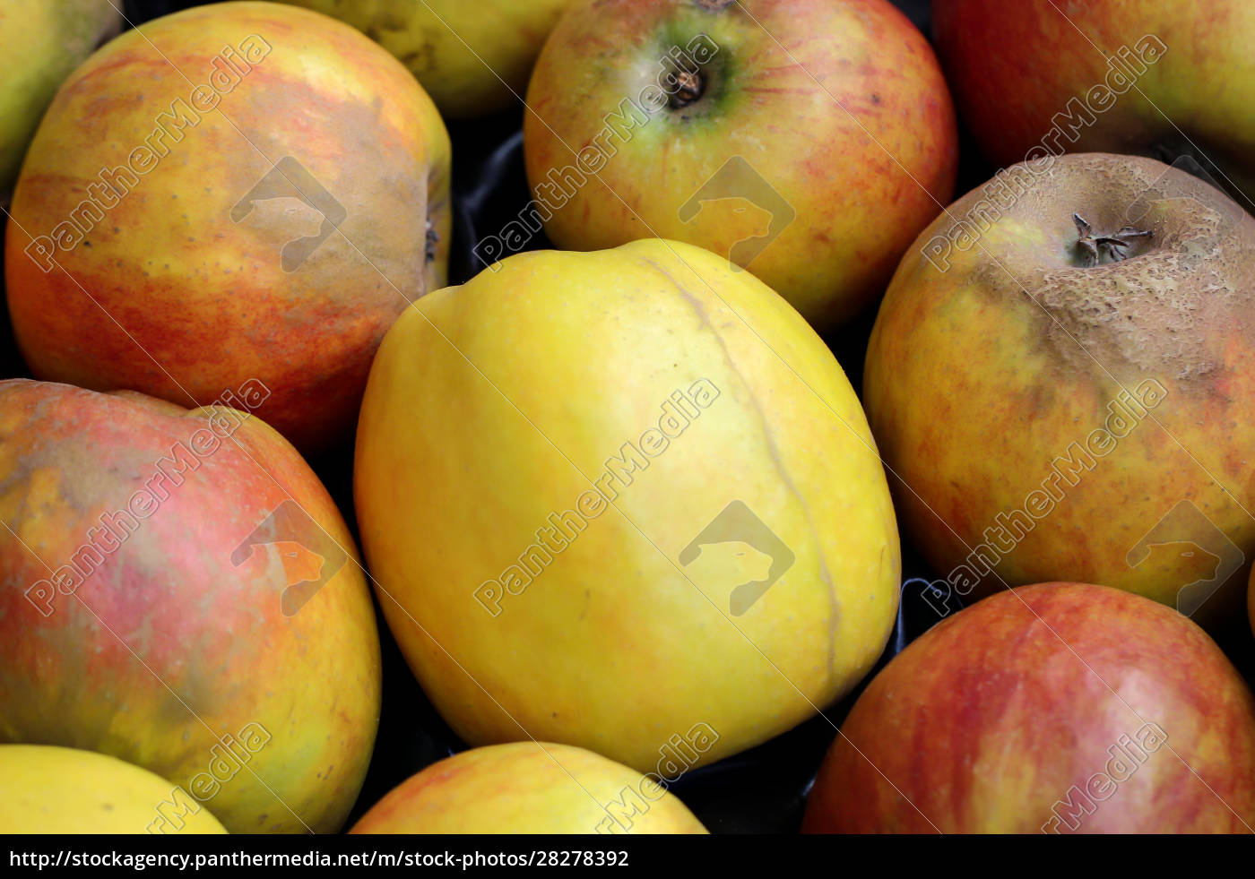 many, apples, are, next, to, each - 28278392