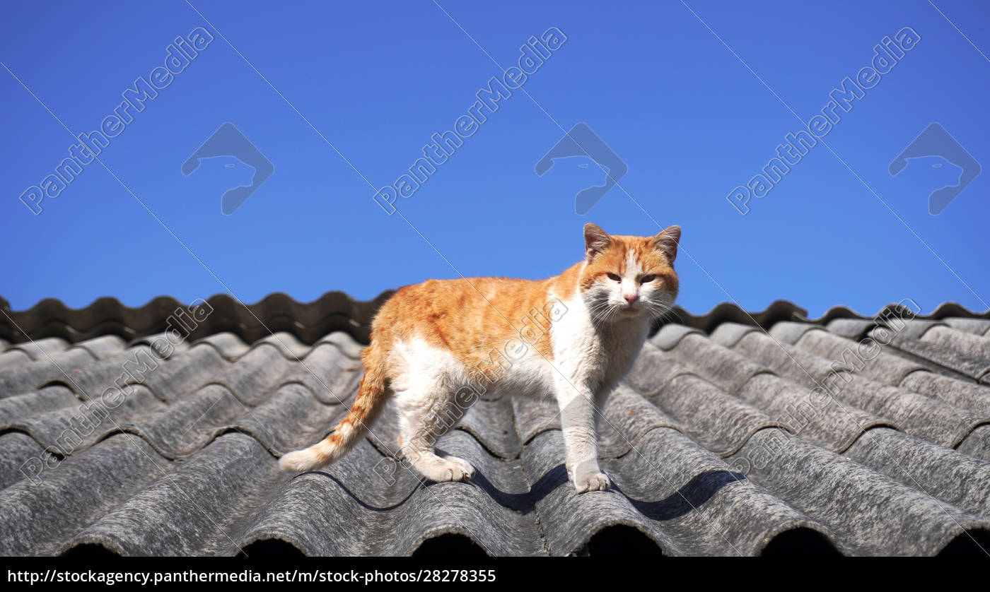 old, stray, cat, on, a, roof - 28278355