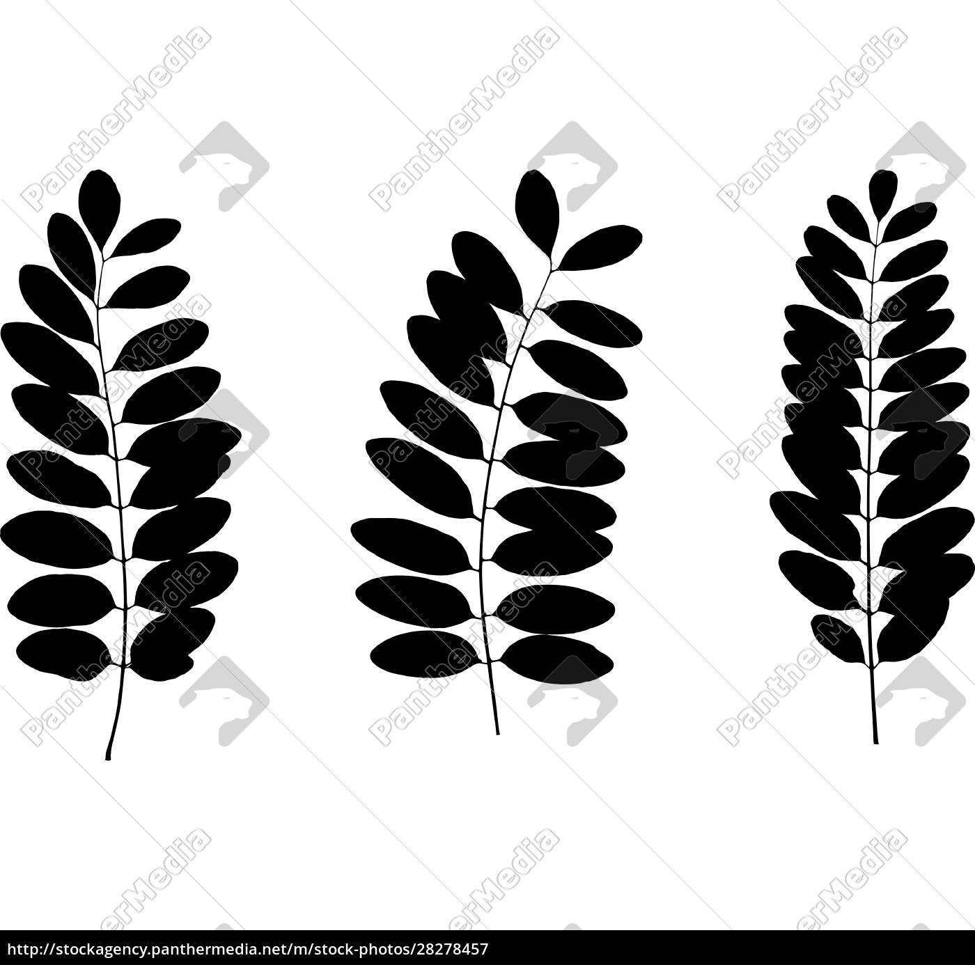 set, of, black, tree, leaf, silhouettes. - 28278457