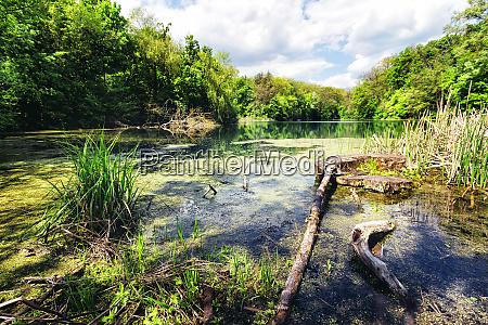 swamp green lake shore