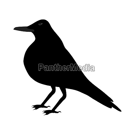 black, crow - 28279216