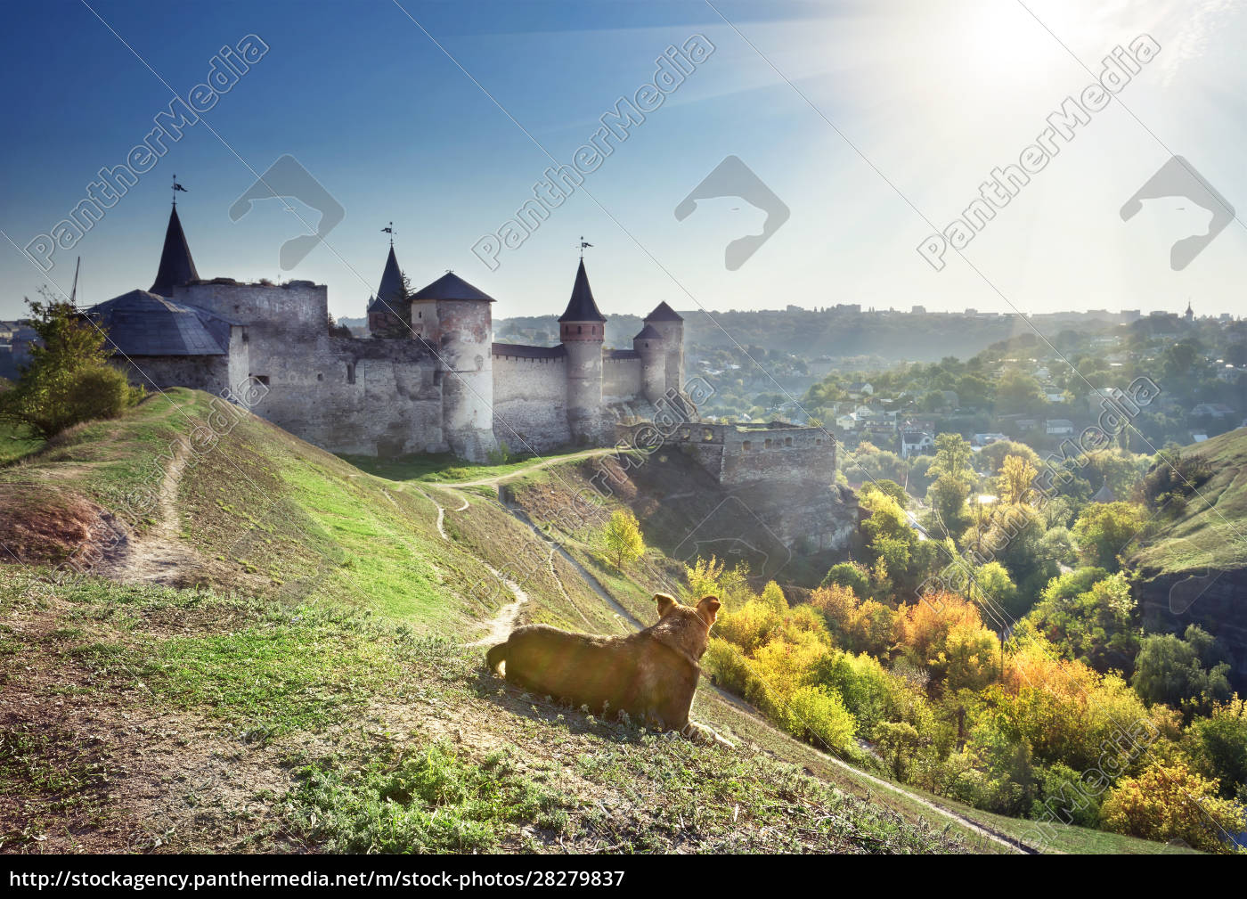 dog, guarding, fortress, on, slopes - 28279837