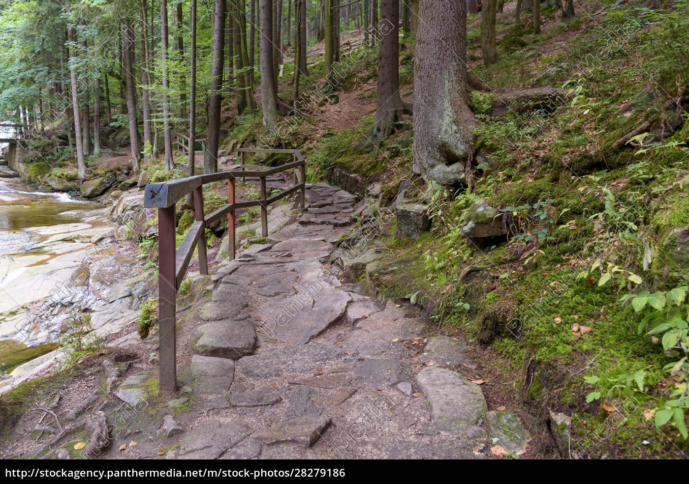 forest, path, to, mumlava, waterfalls, in - 28279186