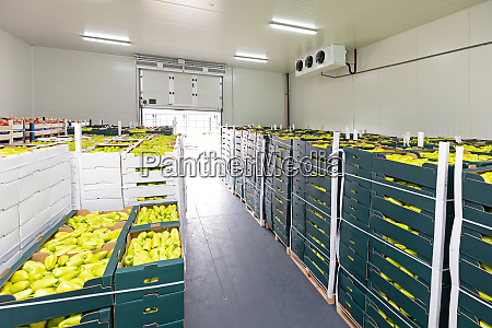 peppers, warehouse - 28279275