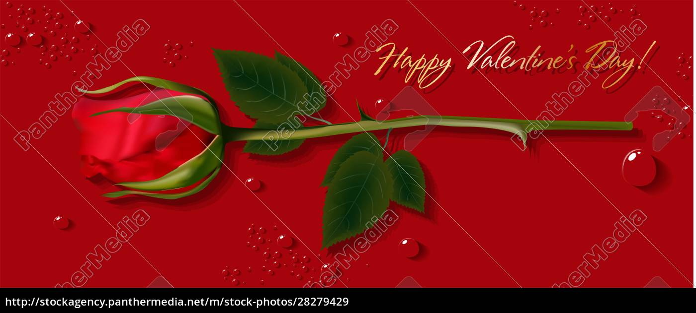 red, rose, on, the, card., horizontal - 28279429