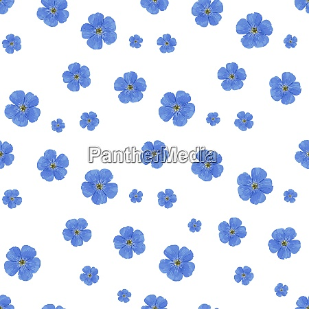 seamless, vector, flower, pattern., white, background. - 28279172
