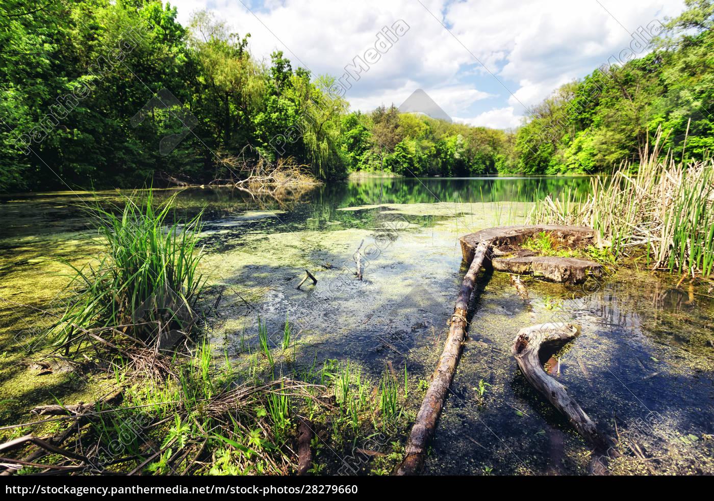 swamp, green, lake, shore - 28279660