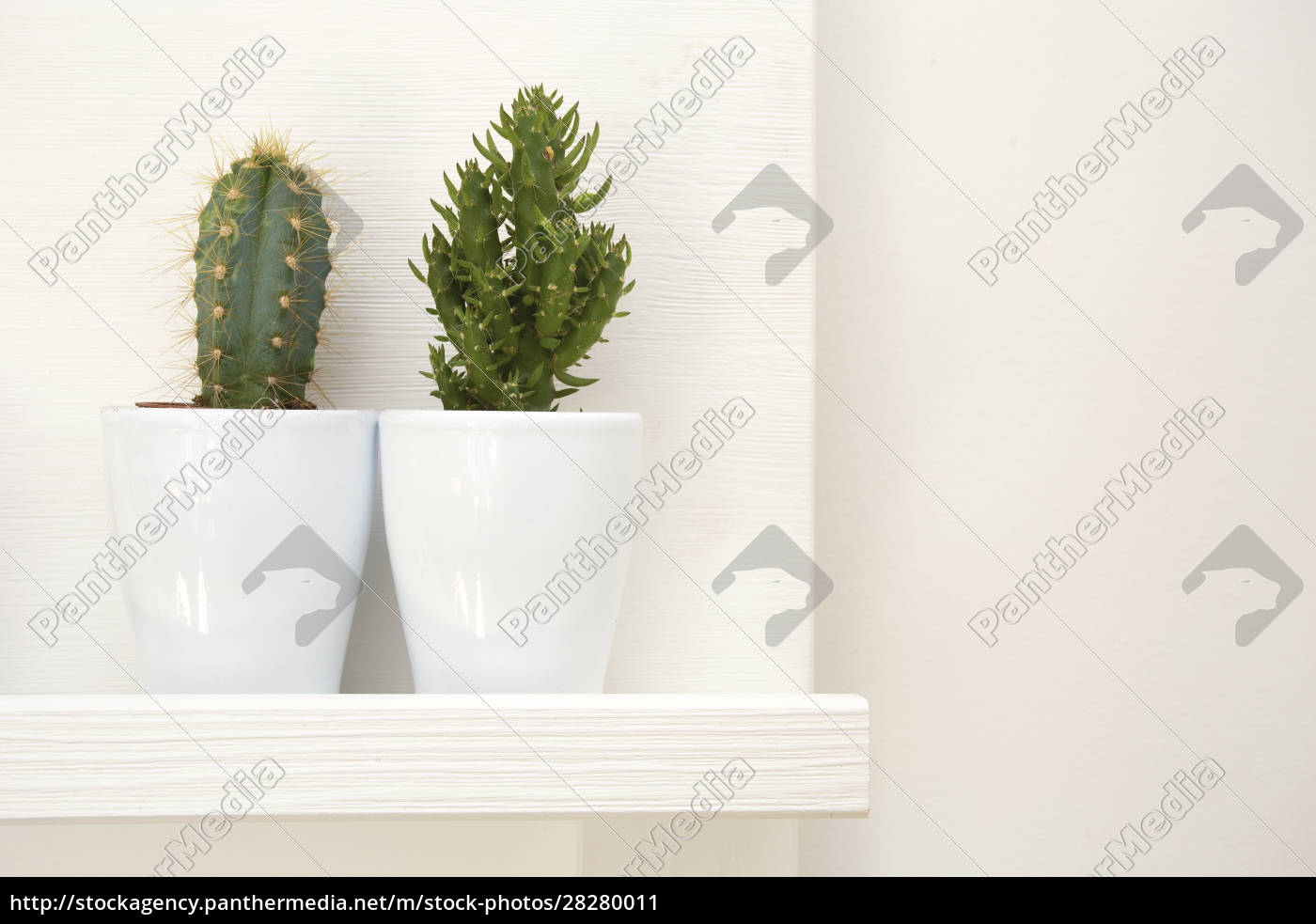 two, green, cactuses, decoration, in, white - 28280011