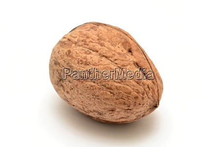walnut, on, white, background - 28280050