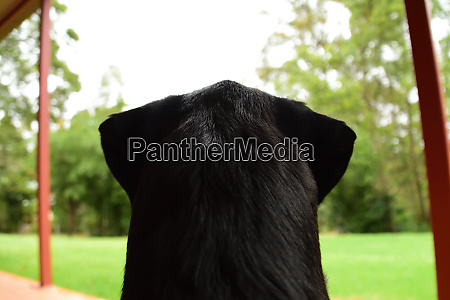 the behind view of a black