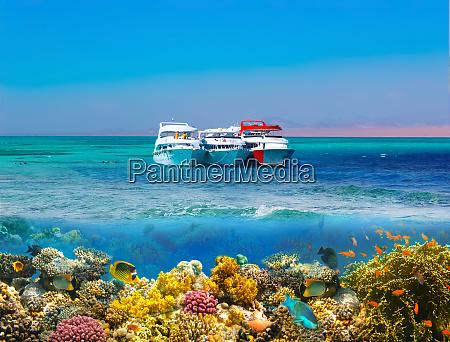 split shot with coral reef underwater