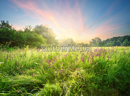 meadow with flowers in the morning